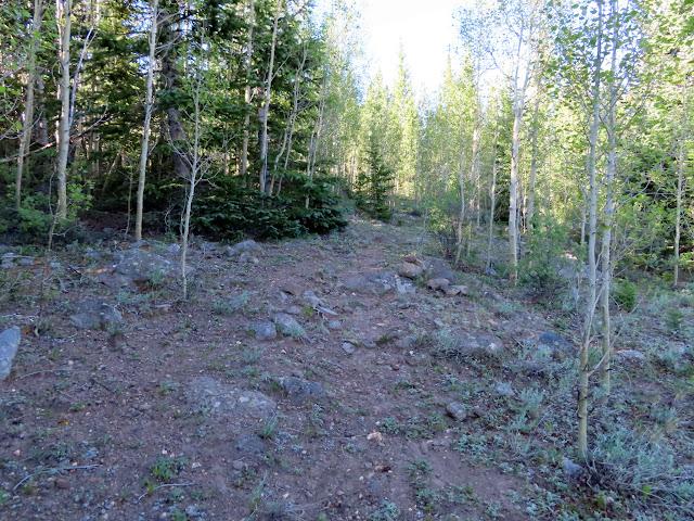 Following a logging road