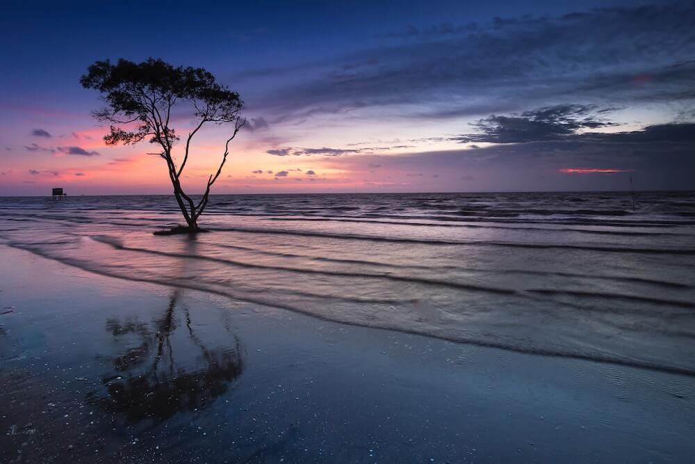 tree near beach peaceful life.jpg