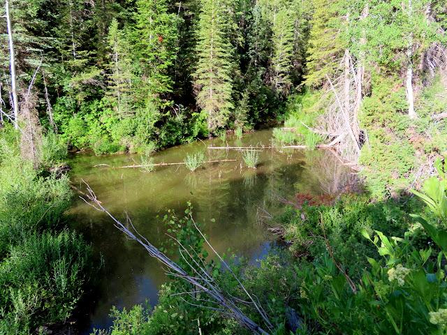 Pond behind a beaver dam