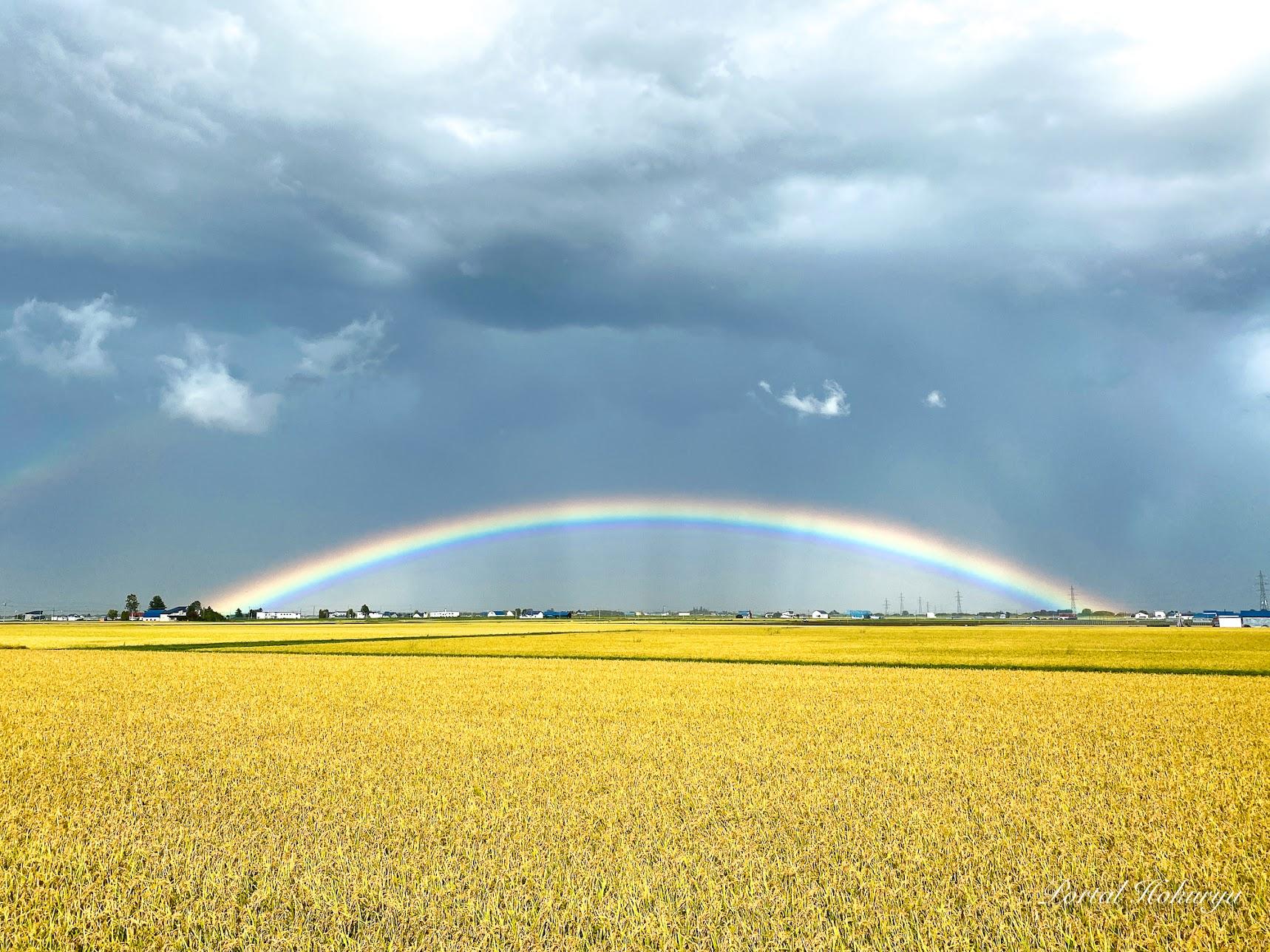 黄金色に染まる田園