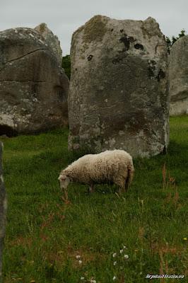 Carnac - kamienie