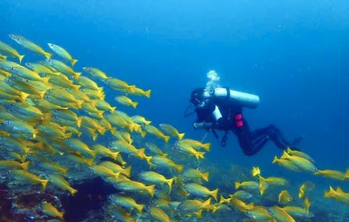 Scuba Diving - Kalpitiya
