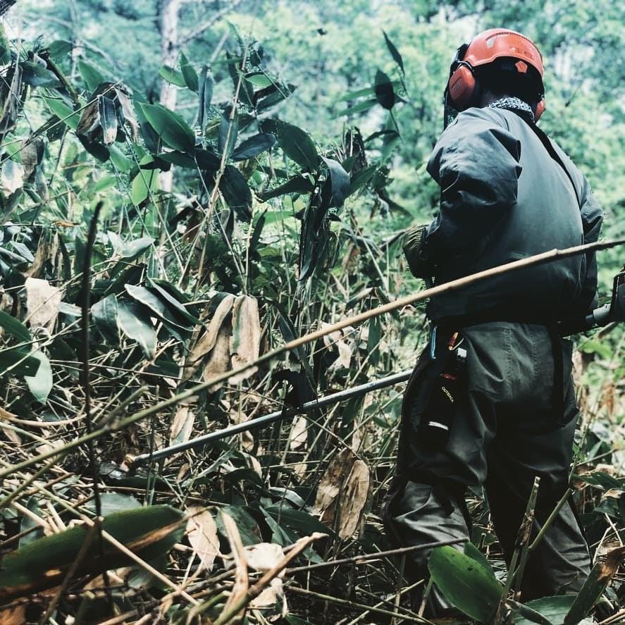 最初の仕事:林内調査 と笹刈り(2020年7月16日)