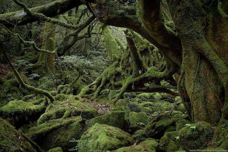 【屋久島】宮之浦岳 縦走(その1)~もののけの森と縄文杉~