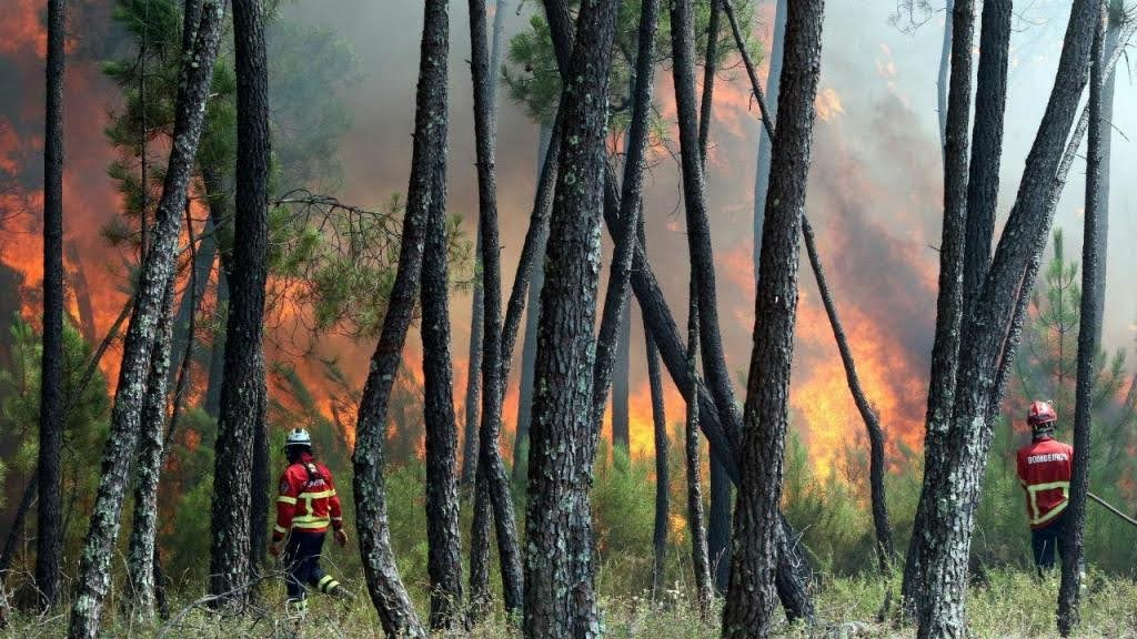 Detido suspeito de atear dois incêndios florestais em Lamego