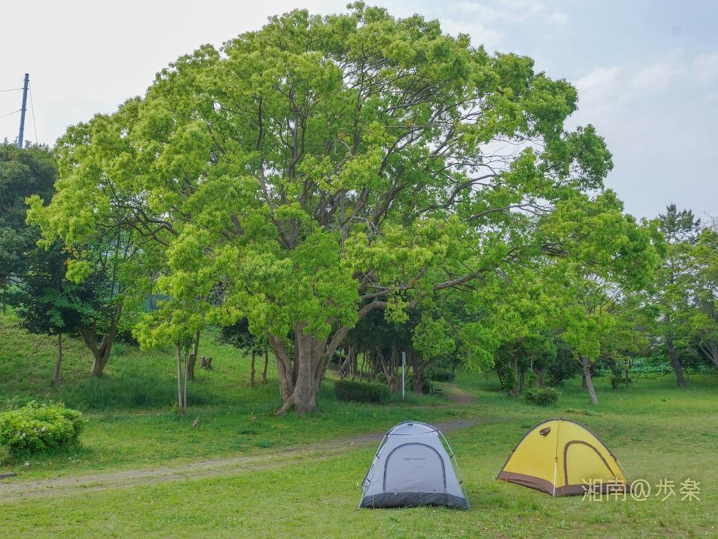 2020/05 近所の緑地でテントを設営する 巣ごもりの合間の息抜き