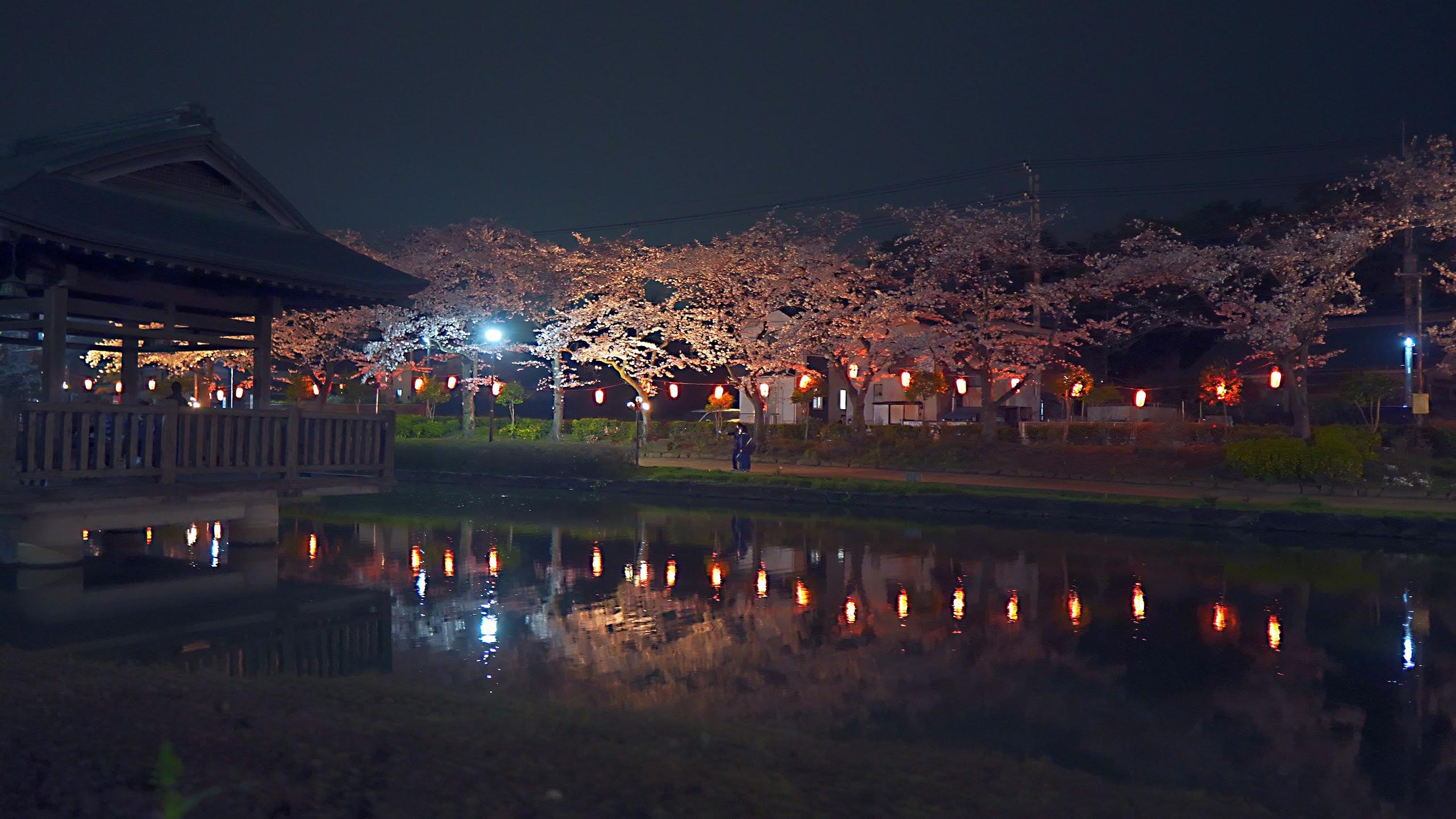 東松山上沼公園&下沼公園の桜(α6600+SIGMA 16mm F1.4+Crane M2)