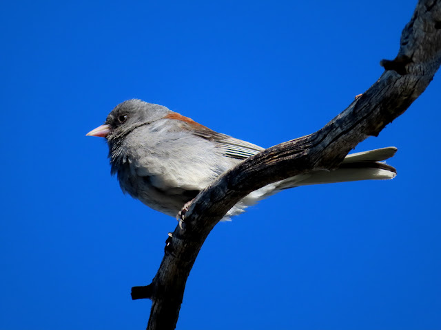 Bird on a dead tree branch
