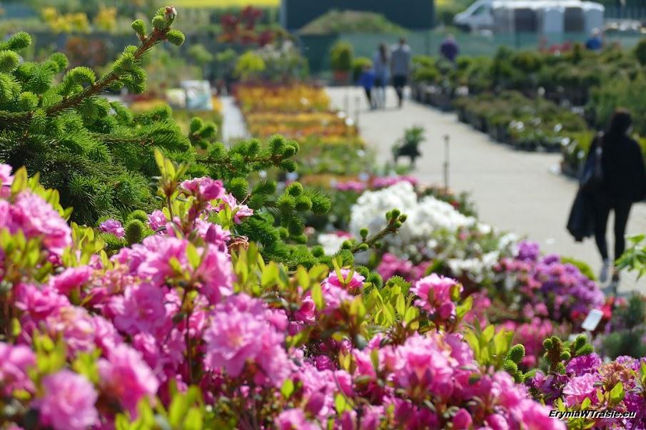 patrz: Parę ogrodów