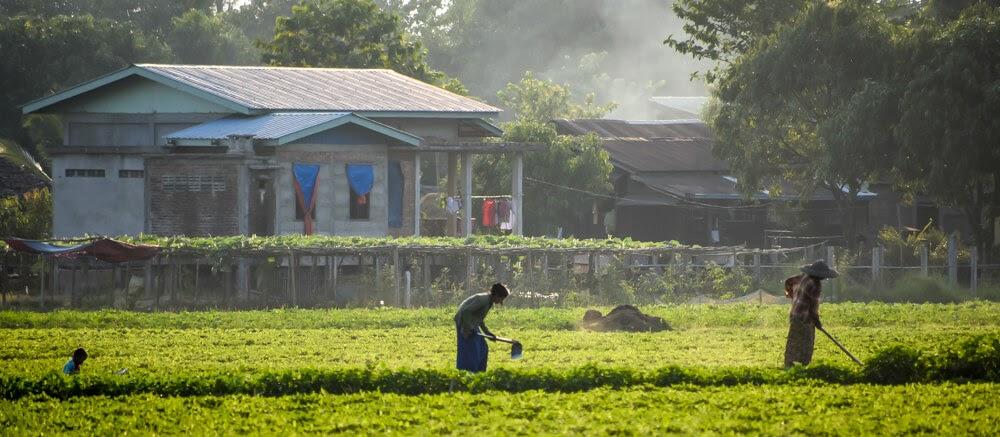 farmers working in fields near hpa an in myanmar.jpg