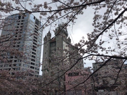 今年の桜は、どこか寂しそう。