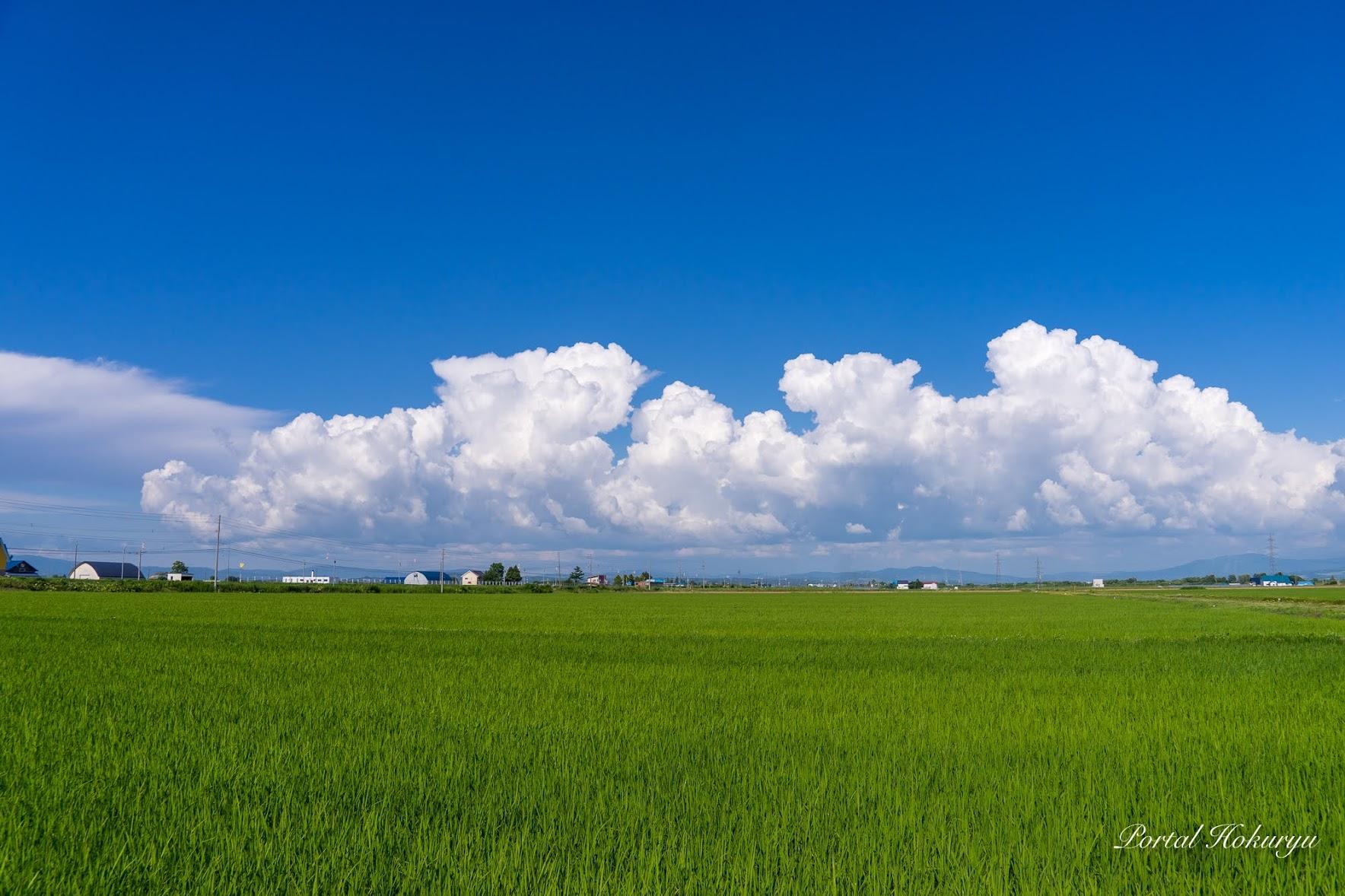青と白と緑の風景