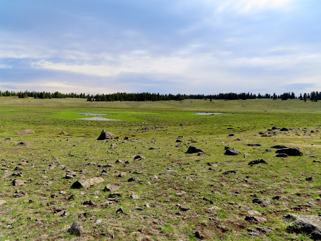 Beef Meadows