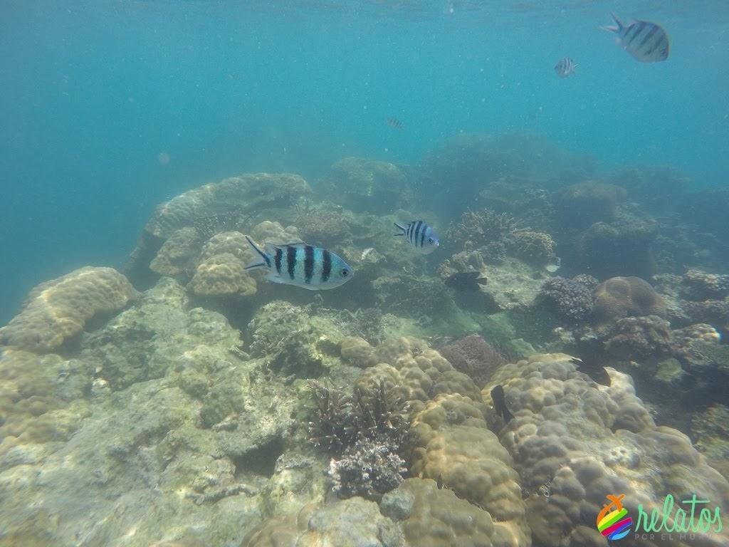 Snorkel Koh Nang Yuan