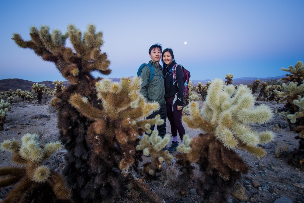 together with cholla cactus