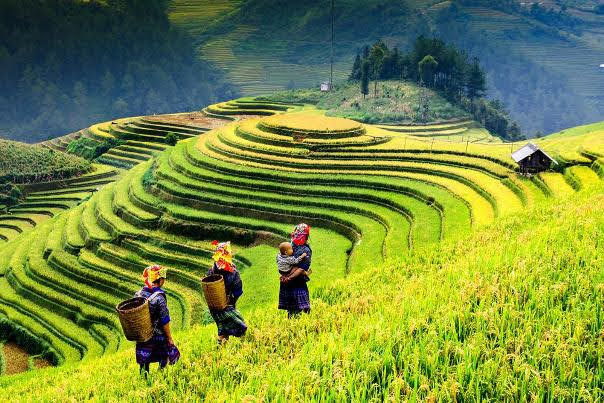 Tour the rice fields