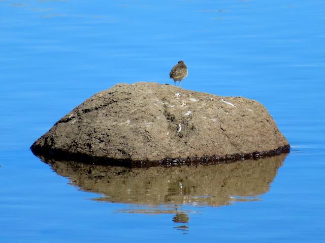 Bird on a rock in Jane Lake