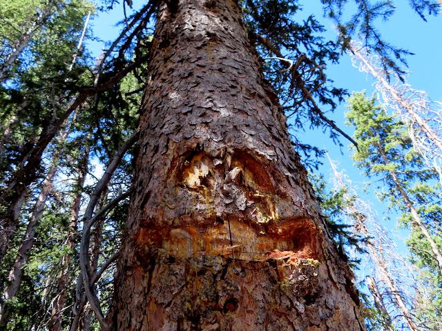 Funny blazed tree