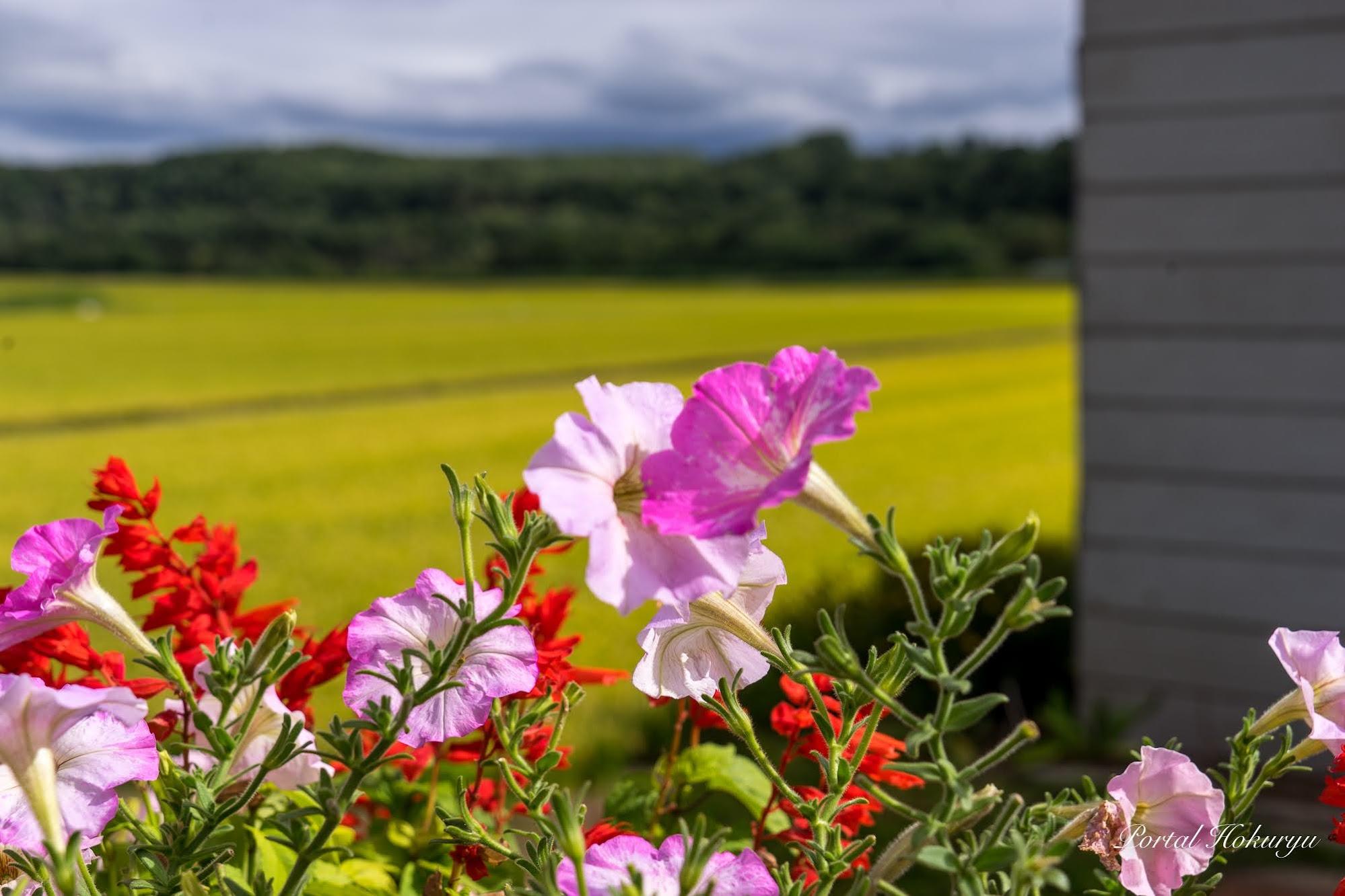 ささやきあうピンクの花たち