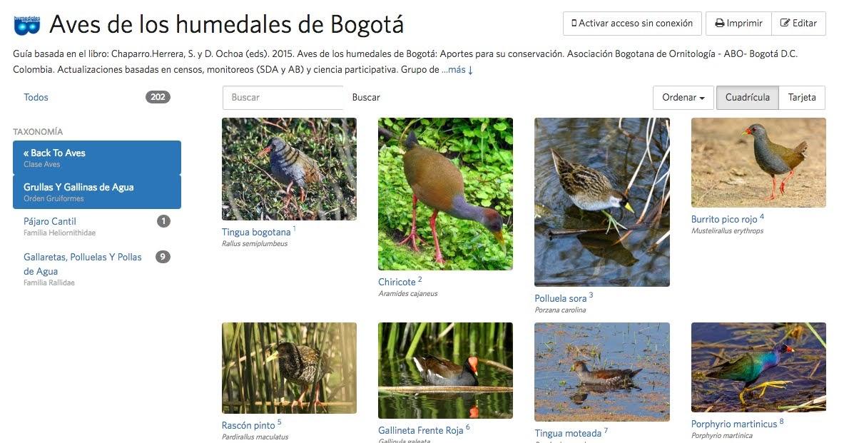 Guía de aves de los humedales de Bogotá