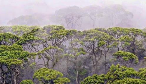 Sinharaja Forest Reserve