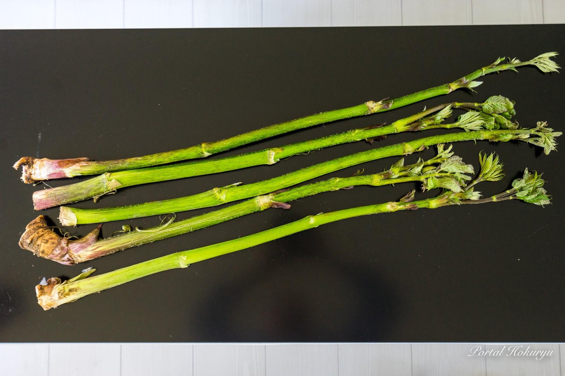春の山菜「ウド」