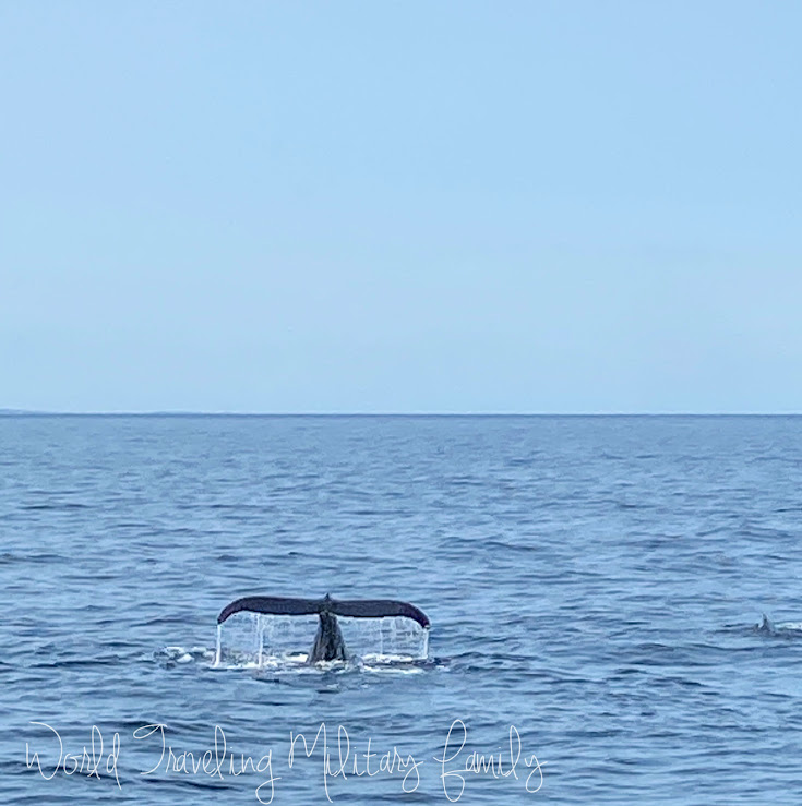 whale tail with water dripping