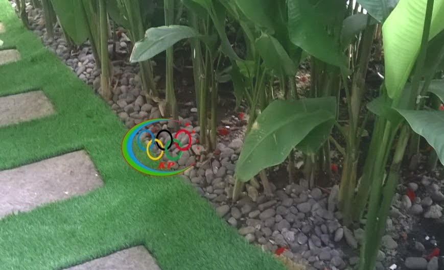 Thảm cỏ nhân tạo sân golf và cỏ tự nhiên Nên dùng thế nào