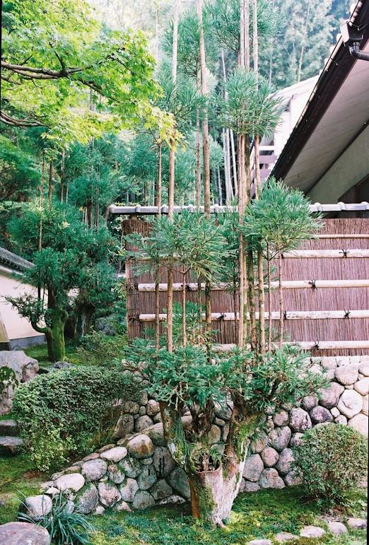 Daisugi, a técnica milenar japonesa no plantio de árvores