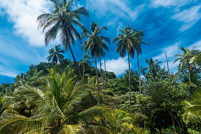 Parcul Național Manzanillo, Costa Rica