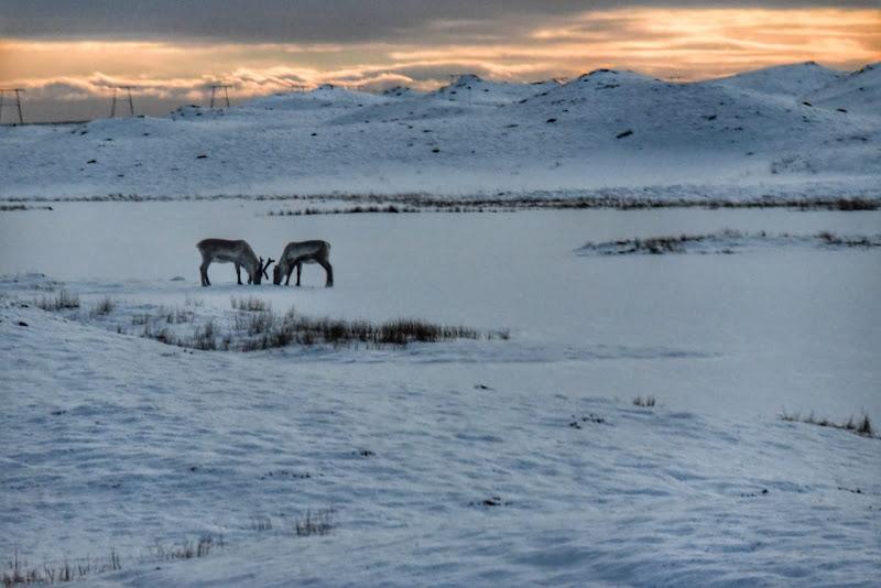 В Исландию за снегом! Юг и полуостров Snæfellsnes. 11 дней в феврале-марте 2020