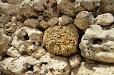 patrz: Kłusaki, megality isaliny