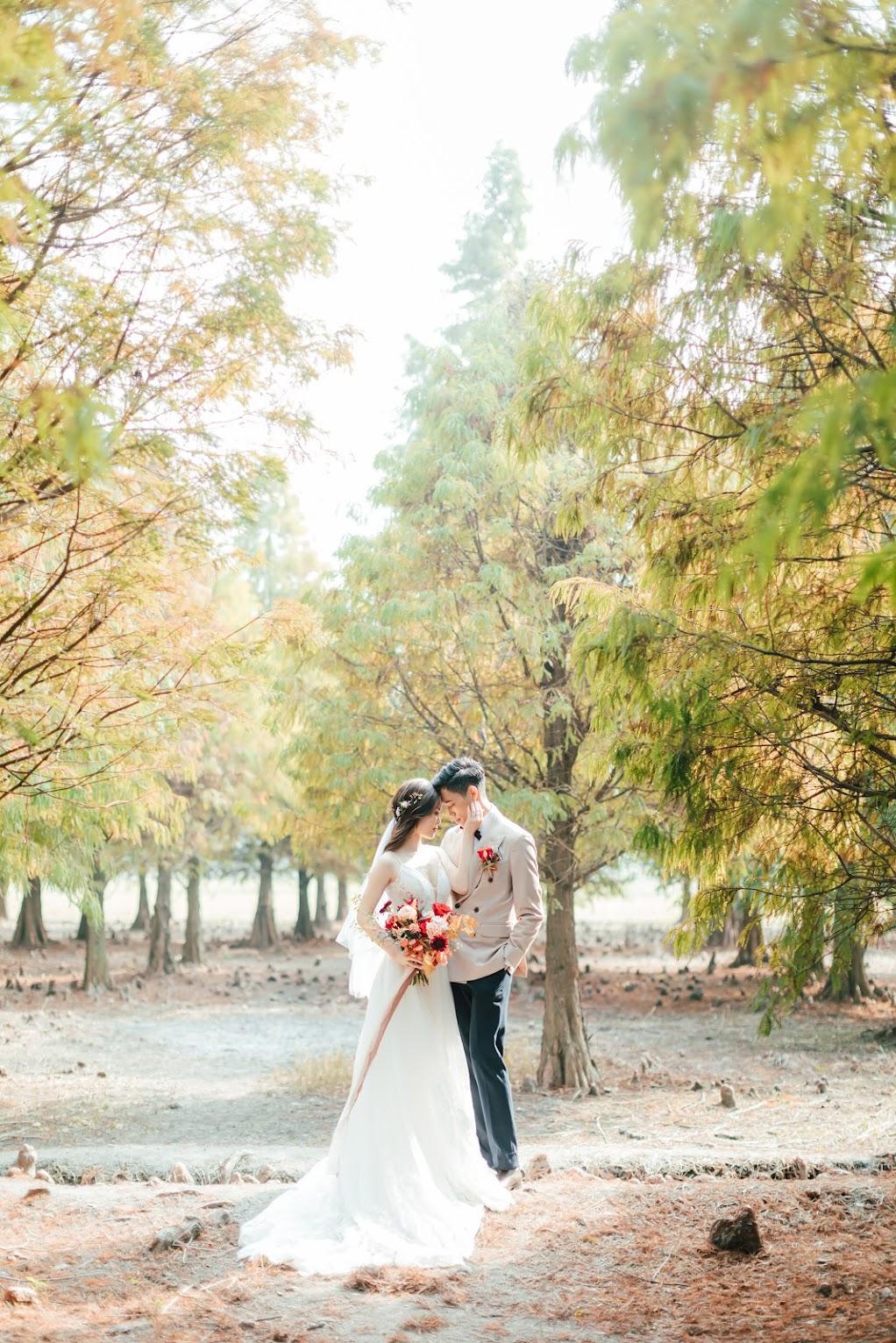 台中美式自助婚紗外拍攝景點-落羽松