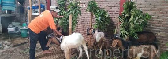 Hari raya kurban 1441 H di Ngawi Jatim