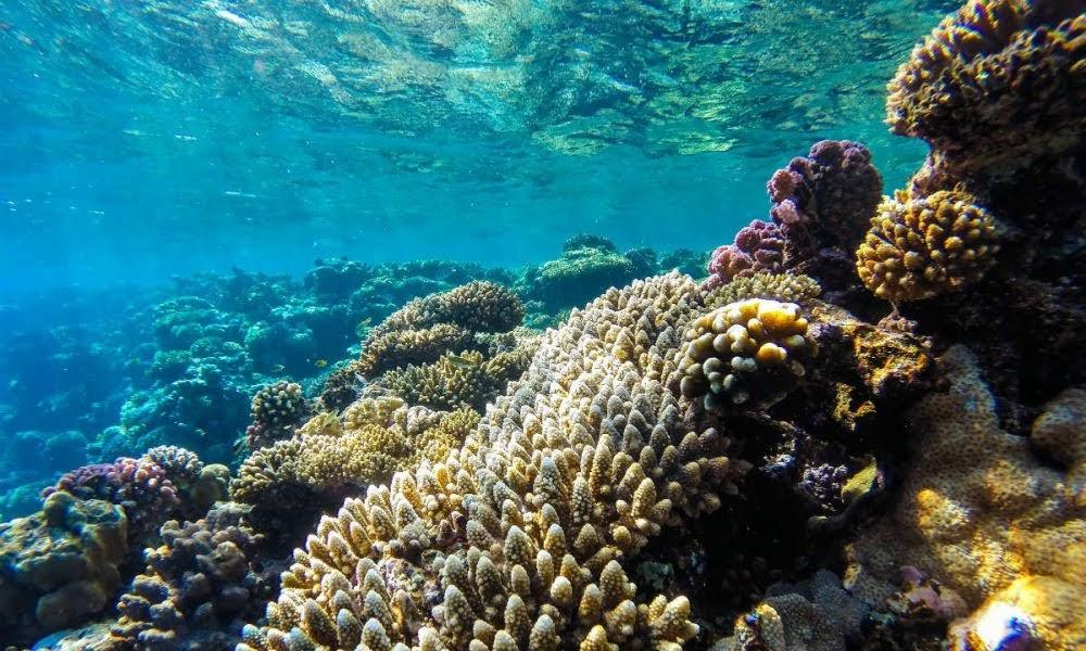 Diputados aprueban resolución de conservación y protección de arrecifes de coral en RD