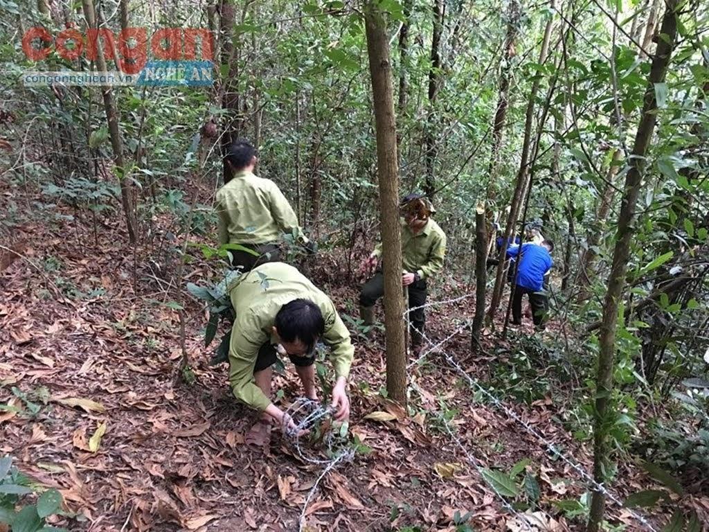 Cần khẩn trương rà soát hiện trạng sử dụng rừng và đất          lâm nghiệp để xây dựng phương án quản lý rừng bền vững
