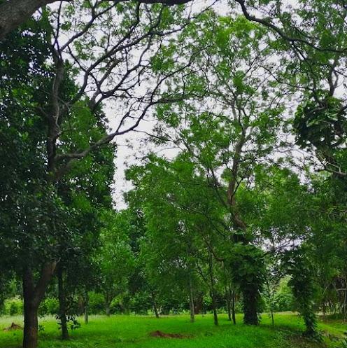 Agro Technology Park in Bata Atha (Bata Atha Farm)