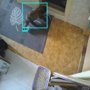 Кошка detected