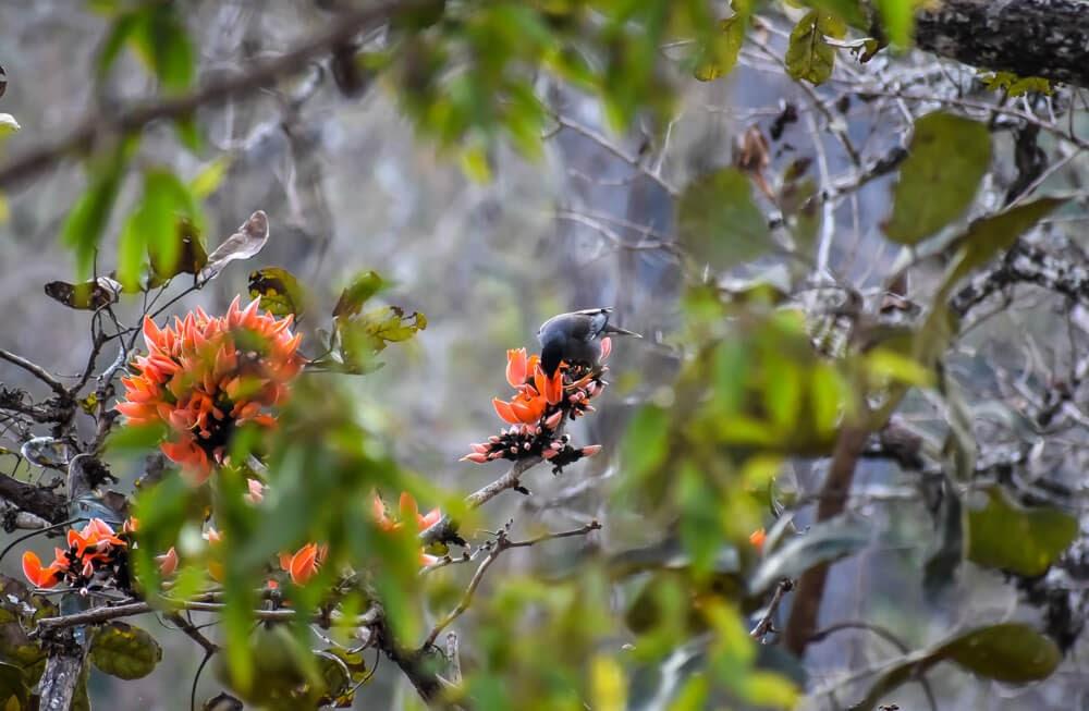 bird in br hills.jpg