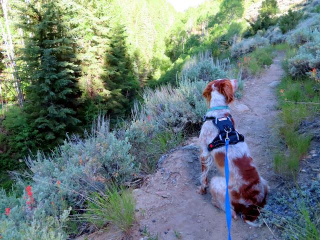 Loa on the trail