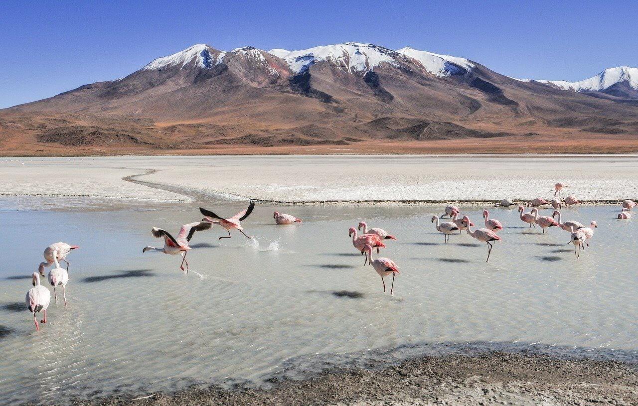 flamingoes as seen in salar de uyuni for article on chile visa