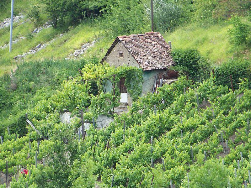 Une cabane de vigne a Cognet