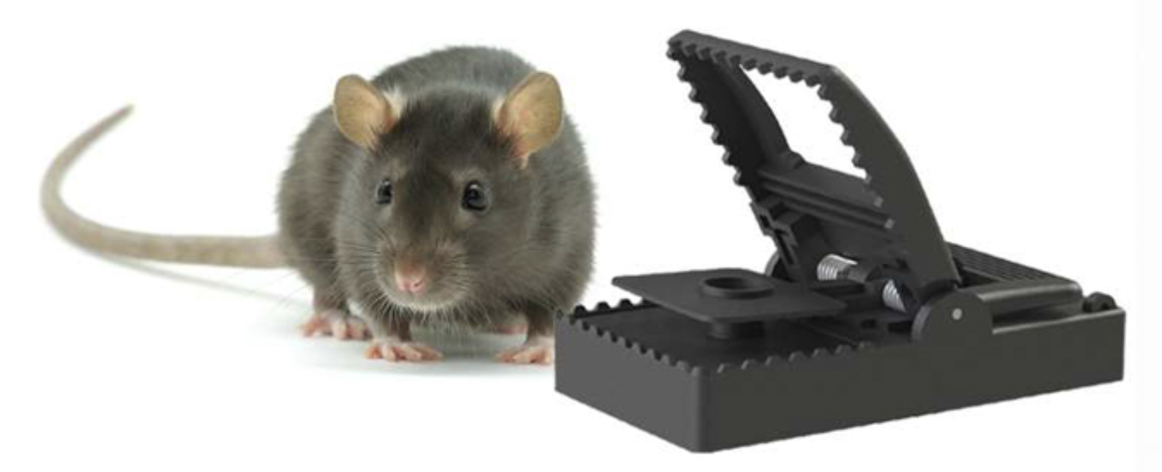 Telit IoT helps build better mousetrap
