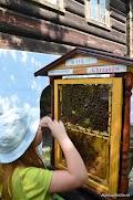 dzień pszczelarza