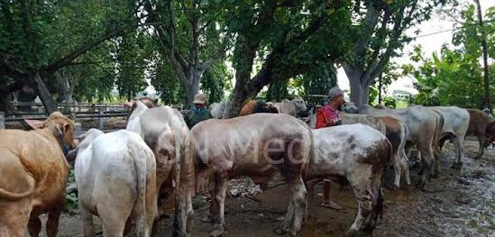 Harga terkini hewan kurban di Ngawi