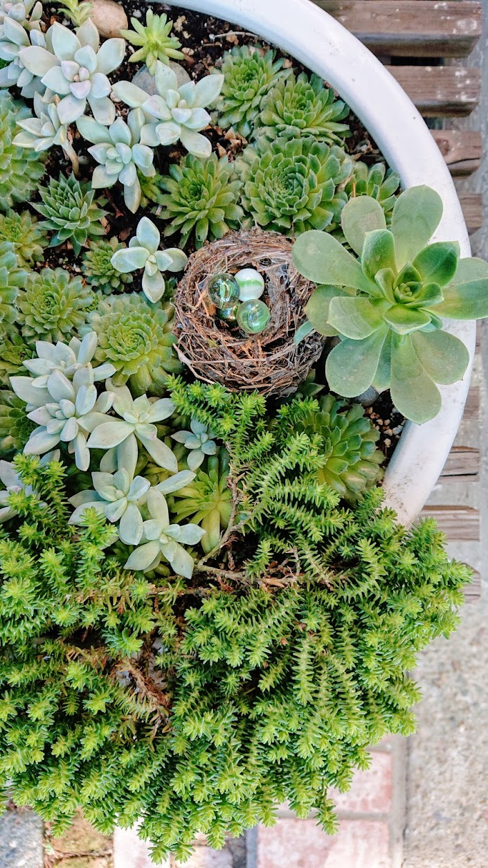 Preserving an abandoned bird's nest and colored glass balls to decorate a succulent arrangement. | FAFAFOOM STUDIO