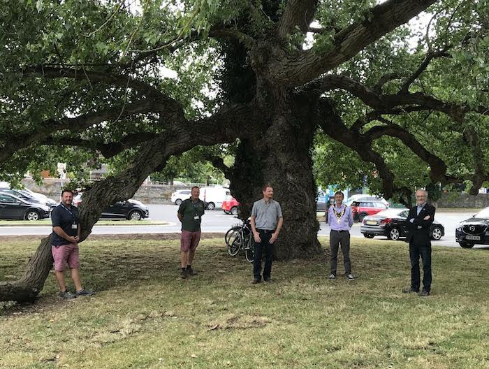 Cuttings of Black Poplar will ensure its gene line