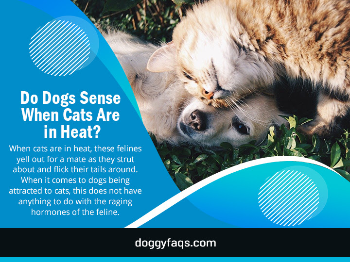 Do Dogs Sense When Cats Are In Heat