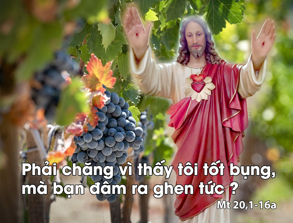 Cả các anh nữa, hãy đi vào vườn nho (19.08.2020 – Thứ Tư tuần XX Thường  Niên) – HUYNH ĐOÀN GIÁO DÂN ĐA MINH