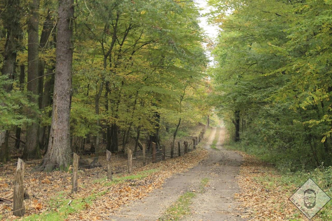 KÉP / Zsigárdi erdőben